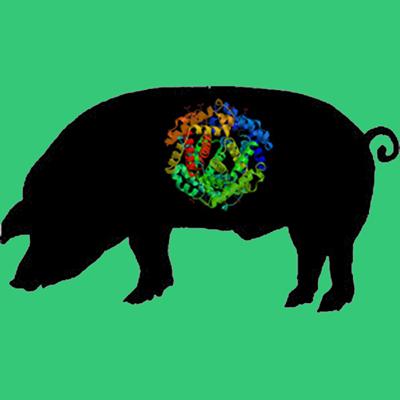 Porcine Fibrinogen