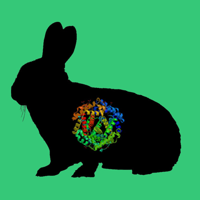 Albumin, Rabbit Plasma