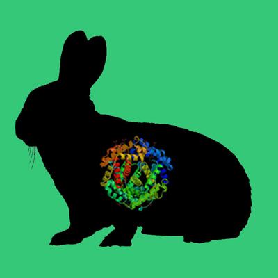 Rabbit PAI-1 (stable mutant)