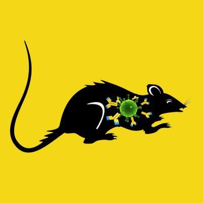 Rabbit anti rat PAI-1 antiserum