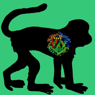 Primate Proteins