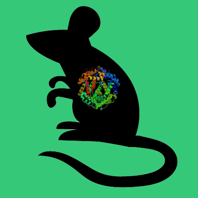 Mouse PAI-1 genetically deficient liver
