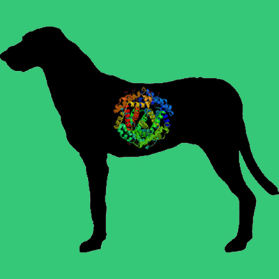 Glycosylated Dog PAI-1 Wild Type Latent Fraction