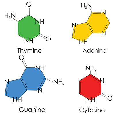 Deoxynucleotide (dNTP) Solution Mix